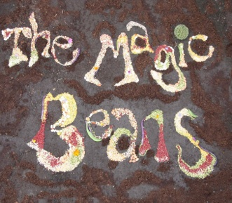 The Magic Beans Cover Image